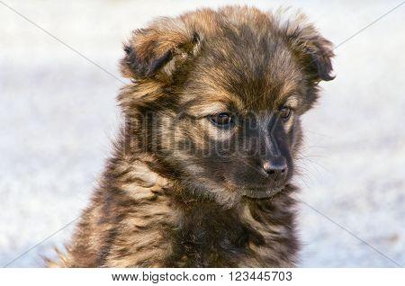Portrait of Mongrel Puppy against Grey Background