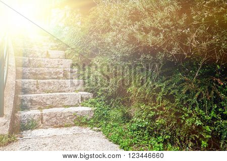 stone staircase in the green garden in paradise