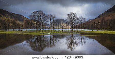A panoramic image of trees refleted in a flooded field at the edge of Buttermere in the Lake District.