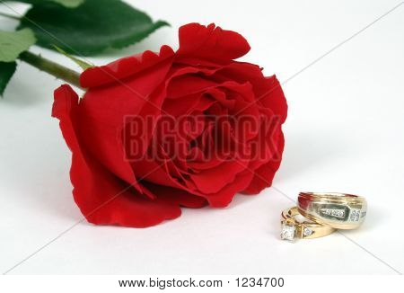 One Rose With Rings