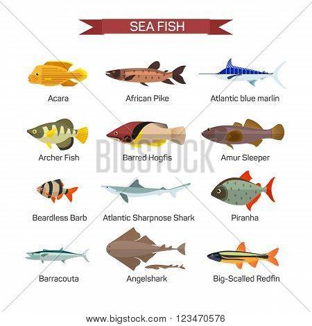 Fish vector set in flat style design. Ocean, sea and river fishes icons collection. Isolated on white background.