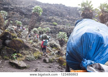 Kilimanjaro, Tanzania - January 19, 2016: Porters with sacks on January 19, 2016 in Kilimanjaro, Tanzania