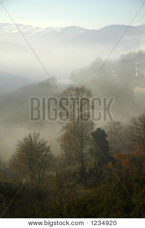 Trees  On Fog
