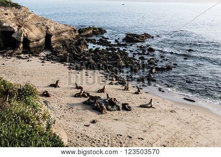 Seals on the beach at La Jolla Cove in La Jolla, California.