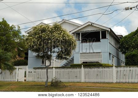 BRISBANE, AUSTRALIA, FEBRUARY 19: a flowering Ivory Curl tree (Buckinghamia Celsissima) in front of a typical Queenslander house in Brisbane, Queensland, on February 19, 2016.