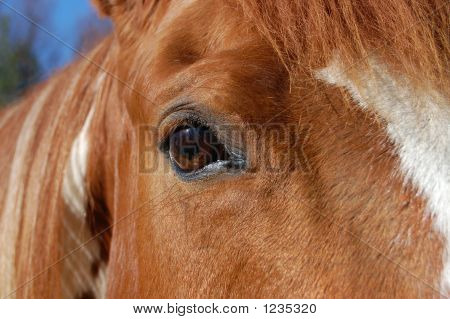 close-up of horse's eye as he gazes into the camera poster