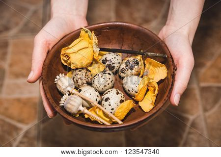 quail eggs with yellow flower are on the brown table in the hands,cook on the kitchen,healthy food,Easter