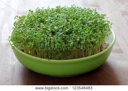 fresh eastre  Cress, cuckoo flower on wooden background