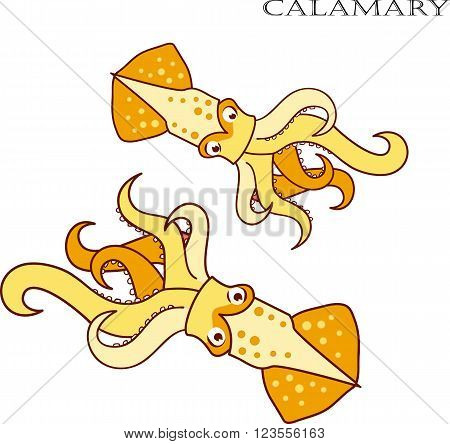 Calamary color cartoon vector illustration. Calamary on white background. Calamary vector. Calamary illustration. Calamary isolated vector.
