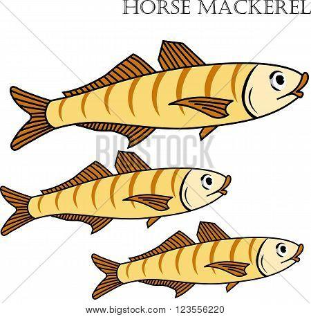 Horse mackerel fish color cartoon vector illustration. Horse mackerel fishes on white background. Horse mackerel fish vector. Horse mackerel fish illustration. Horse mackerel fish isolated vector.