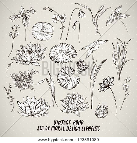 Set of monochrome vintage pond water flowers vector elements, Botanical shabby chic illustration reeds, lily, iris, wildflowers leaves and twigs.