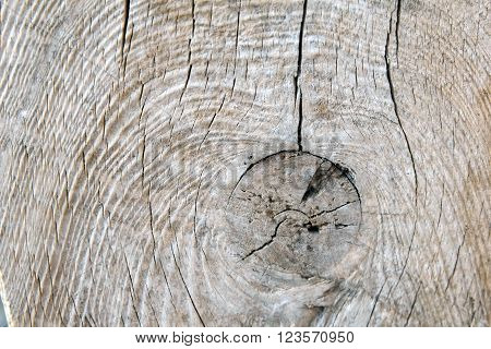The texture of cut old wood. The background of a tree trunk with a heart. Section of tree trunk. The wood background. Nature for crafts and interior.