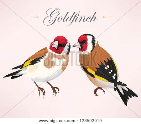 Vector illustration of high detailed pair of goldfinches