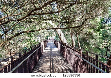 Metal elevated bridge with overhanging trees at the King's Park botanical gardens in Perth, Western Australia.