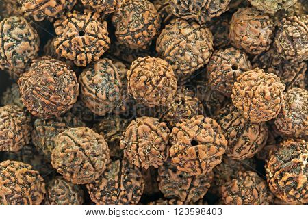 Closeup background texture of Rudraksha, seeds from fruit of Elaeocarpus Ganitrus Roxb tree used as prayer beads. Representing tear of fulfillment shed by Shiva after emerged from yogic meditation