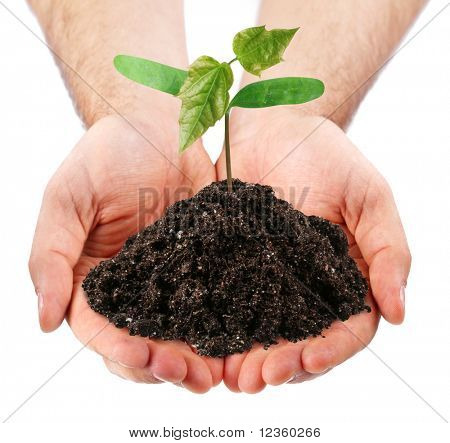 young sprout in the hands of a man on a white background