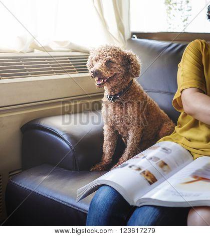 Dog Pet Animal Adorable Mammal Relax Happy Concept