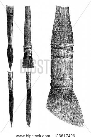 Brushes and skunk, vintage engraved illustration. Magasin Pittoresque 1876.