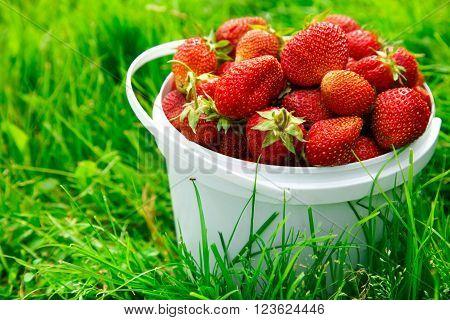 Ripe Strawberry In Basket