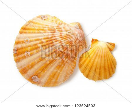 Two Seashells
