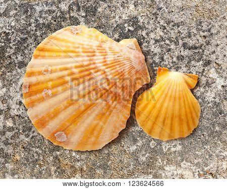 Two Seashells
