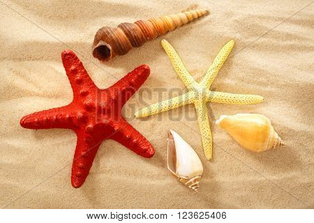 Fingerfish, Seastar And Seashells In Sand