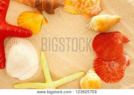 Fingerfish, Seastar And Seashells In Sand