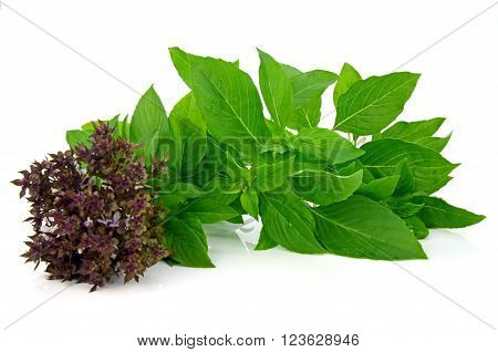 Sweet Basil Leaf With Flowers (ocimum Basilicum Linn) Isolated On White Background.