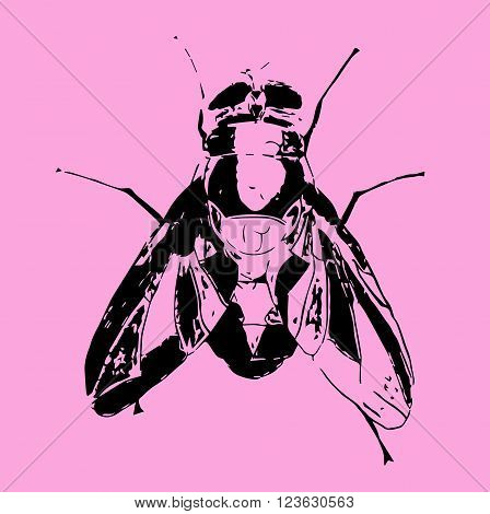 Hand Drawn Insect Vector Scribble Icon Illustration .