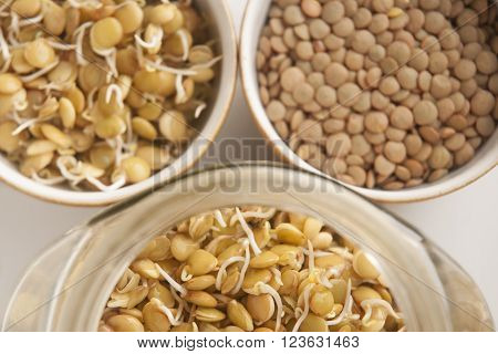 Health in seed - germination of seeds