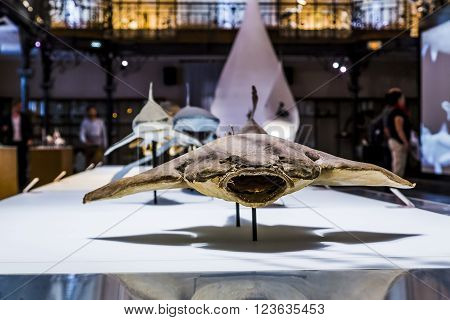 Monaco, Monaco - May 21: This is one of the exhibition halls with sharks of the Museum of Oceanography May 21, 2015 in Monaco, Monaco.