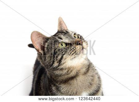 Cute Tabby Kitten Looking Up