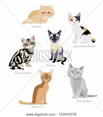 Different breeds of cats: Persian, Japanese Bobtail Shorthair, Siamese, American Shorthair, Abyssinian, British Shorthair isolated on white background