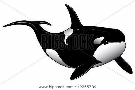 Killer Whale, Tattoo