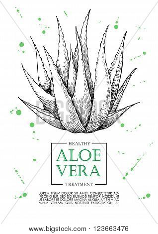 Vector aloe vera hand drawn illustrations. Detailed drawing. Aloe Vera banner poster label brochure template for business promote.