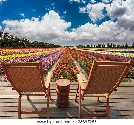 Two convenient chaise lounges stand on a roadside on wooden scaffold. The huge field of buttercups in the kibbutz on border with Gaza Strip