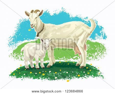 Goat with kid on a meadow.