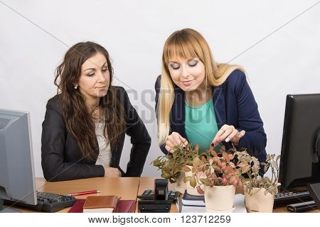 One Office Employee Unfriendly Looks At Colleague - A Lover Of Flowers