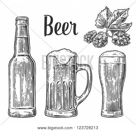 Beer glass mug bottle hop. Vector vintage engraved illustration isolated on white background