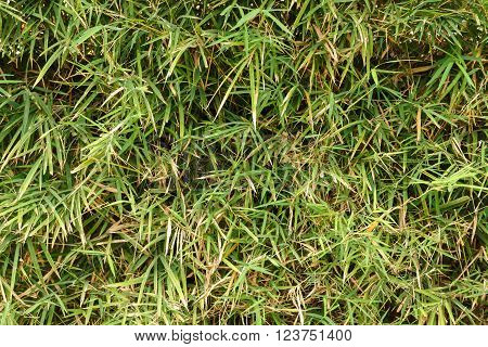 Green grass texture natural background photo stock