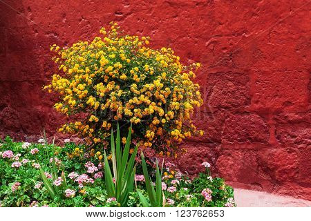 bush with yellow flowers on a red wall