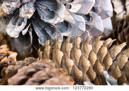 vague abstract texture a closeup of the old coniferous cone for a natural background