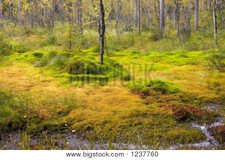 Bright Bog