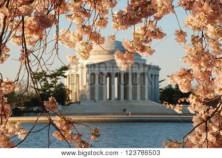 Cherry Blossoms with the Jefferson Memorial in the background.