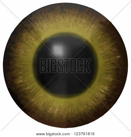 Dark brown eye iris vector texture on white background