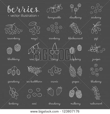 Hand drawn outline berries on the blackboard. Strawberry, goji, sea buckthorn, cherry, raspberry, barberry, mulberry, gooseberry, juniper, aronia, rose hips, honeysuckle, cloudberry, maqui.