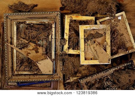 Termites in the wooden frame on background