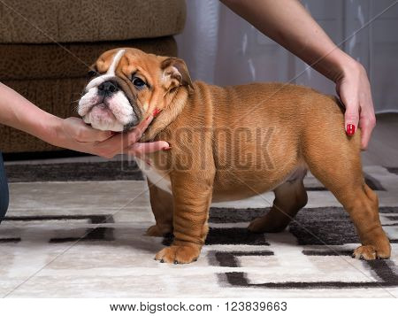 Breeder shows a puppy. Female hands put the puppy in the correct rack