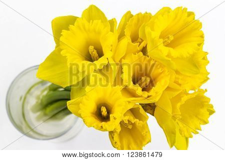 Photo shows composition of jonquils on white background.