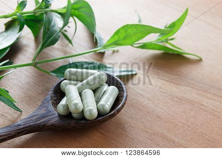 Andrographis paniculata capsule herb or creat capsule herb on wood spoon.Wood spoon and leaf trunk creat on wood background.